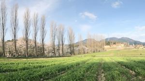 ジェネリスト109ブルーメの丘からの綿向山優秀賞.JPG
